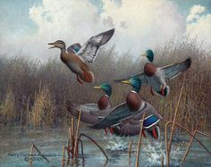 2008 California Duck Stamp