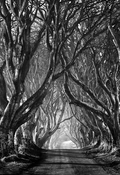 Spooky tree lane... I need to do 1 or 2 murals, or at the least several framed prints of eerie trees.