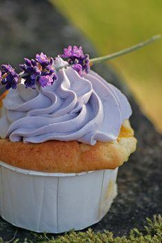 Käfers-Chaos-Küche: Noch mehr lila: Nektarinen-Sauerrahm Cupcakes mit Lavendelcreme