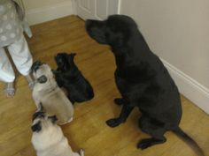 Look at them all waiting for a biscuit