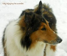 """This is our dog """"Toby"""", he is 8 1/2 years. You couldn't ask for a sweeter companion."""