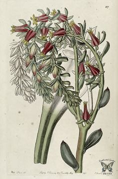 Edwards's Botanical Register, vol. We hope you will enjoy our collection of botanical illustrations as much as we do. Collage Illustration, Botanical Illustration, Illustrations Posters, Botanical Flowers, Botanical Art, Pink Flowers, Vintage Botanical Prints, Botanical Drawings, Nature Prints