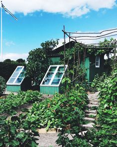 Triss i sommar-DIY | Living by W Growing Gardens, Growing Plants, Garden Beds, Home And Garden, Lorax, Cold Frame, Potting Sheds, Grow Your Own Food, Green Garden
