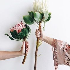 Proteas are simply majestic!.