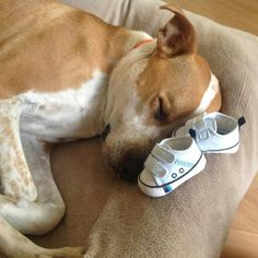 6. This dog better get sleep now before the baby comes.