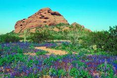 desert botanical garden - Google Search