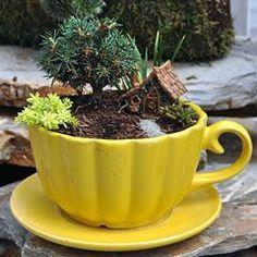 Little garden House - Countryside Gnome Micro House Micro Garden, Mini Fairy Garden, Gnome Garden, Fairy Gardening, Miniature Plants, Miniature Fairy Gardens, Garden Terrarium, Succulents Garden, Winter Greenhouse