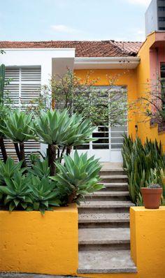 Casa abril - Brazil Agave attenuata