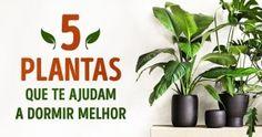 5plantas que teajudam adormir melhor