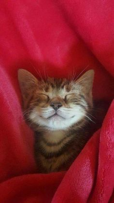 Smiling sleepy tabby kitty.