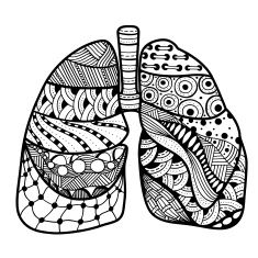 Image result for lung drawing
