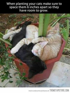 We can grow cat plants? How come I didn't find out about this until now?!? (via For the Love of Black Cats (Black Cat Appreciation Page))