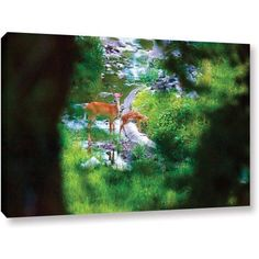 Cody York Deer Gallery-Wrapped Canvas, Size: 24 x 36, Brown