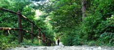 [여행] 이 길에 싱그러운 봄이 한 가득.. 5월에 걷기 좋은 길