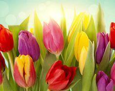 Diferentes cores de flores tulipa Papéis de Parede - 1280x1024