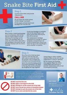 Snake Bite First Aid. Being prepared is really important, it can make difference… Snake Bite First Aid. Being prepared is Disaster Preparedness, Survival Prepping, Survival Skills, Survival Shelter, Survival Gear, First Aid Steps, First Aid Classes, First Aid Cpr, Emergency First Aid