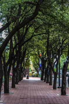 Tree Tunnel | downtown Dallas, Texas