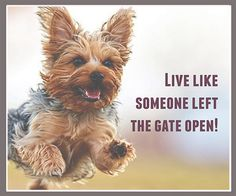 Funny Animal Pictures, Dog Pictures, Funny Animals, Cute Animals, Cute Puppies, Dogs And Puppies, Yorkie Puppy, Dog Quotes, Life Quotes
