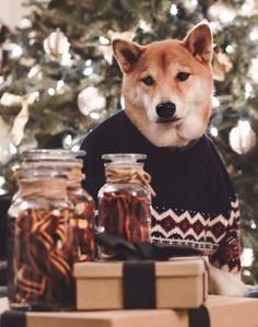 dog modeling agency
