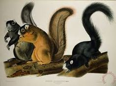 Image result for lynx and squirrel american painting