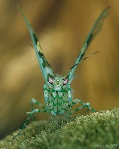 Discover Your World. Mantis - Insect predator