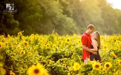 http://www.timmesterphoto.com/blog/wp-content/uploads/2012/09/Sunflower-Field_001.jpg