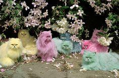 Cool Kats
