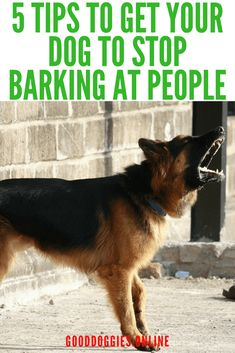 If your dog barks at people, here are 5 ways to stop your dog barking at people. #dogs #dogtraining #barking