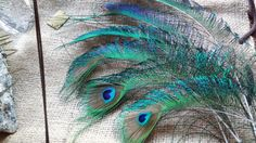 Peacock Feathers 4 Border Feathers 2 All by CherylsGoodStuff