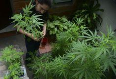 US-Daten - Wie der typische Cannabis-Konsument tickt und kauft - http://ift.tt/2ahxx3M