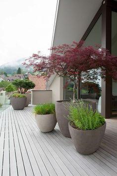 moderner Vorgarten mit Blumentöpfe mit Bonsai Bäume und grüne Pflanzen