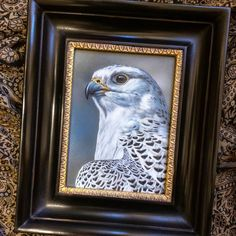 Gyrfalcon watercolor on board with sterling silver Rebecca Latham - one of several new falcon studies of the Midwest Peregrine Society's birds off to Seaside Art Gallery in NC.  #wildlife #watercolor #art #animal #painting #miniature #artist #miniatureart #realism #animallovers #falconry #falcon #falcons #gyr #gyrfalcon #birdsofprey #raptor #birds #birdlovers #naturalism #midwestperegrinesociety