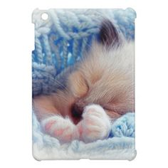 Sleeping Siamese Kitten Paws Cover For The iPad Mini