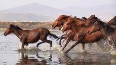 Cute Horses, Pretty Horses, Horse Love, Most Beautiful Horses, Animals Beautiful, Beautiful Horse Pictures, Amazing Photos, Wild Horse Videos, Cavalo Wallpaper