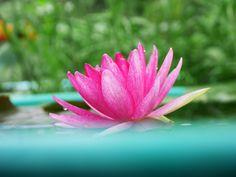 Explore Klong15 Waterlily's photos on Flickr. Klong15 Waterlily has uploaded 1491 photos to Flickr.