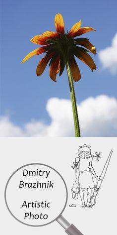Dmitry Brazhnik   Artistic Photo   Printable   Design   Interior   Instant Download   Orange flower Photography (fragment)   Full Color Summer Garden Blue Sky   №D-1002