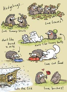Les hérissons - dessin de Simon's Cat
