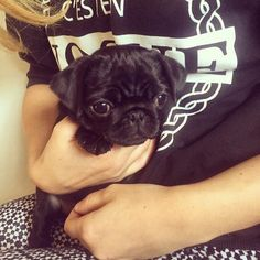 Nala is so cute such a lucky dog to have such a loving owner like Zoe Cutest Pug Ever, Cutest Thing Ever, Cute Pugs, Cute Puppies, Pointless Blog, Zoella, Pug Love, Funny Cute, Beautiful Creatures