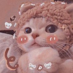 Cute Kawaii Animals, Kawaii Cat, Cute Little Animals, Cute Funny Animals, Cute Baby Cats, Cute Cats And Kittens, Kittens Cutest, Cute Dogs, Funny Cat Wallpaper
