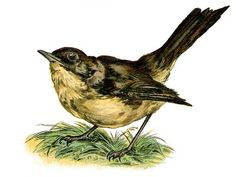 Vintage Clip Art - Sweet Nightingale Bird - The Graphics Fairy