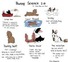 Bunny Science by artist: Alex Nakamura Bunny Meme, Hunny Bunny, Cute Baby Bunnies, Funny Bunnies, Cute Baby Animals, Pet Bunny Rabbits, Pet Rabbit, Rabbit Diet, House Rabbit