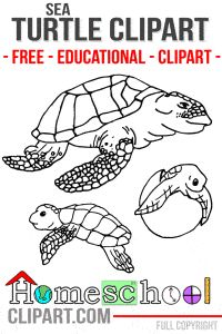 FREE Sea Turtle Lifecycle Clipart