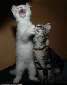 No, no, it's my turn to sing now.