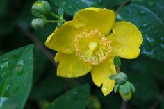 #fresh #yellow #flowers #rain #oslo#norway