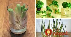 11 druhov ovocia a zeleniny, ktoré môžete pestovať znovu a znovu