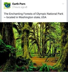 Enchanting Forests of Olympic National Park