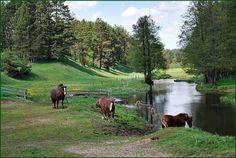 Rospuda River - District Augustow, Podlaskie