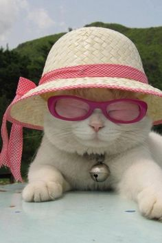 This cat is ready for a relaxing summer!