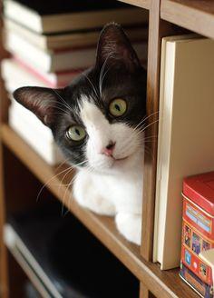 ^ literary cat.   english: https://translate.google.com/translate?sl=auto&tl=en&js=y&prev=_t&hl=en&ie=UTF-8&u=http%3A%2F%2Fvivas.fi%2F23-nerokasta-vinkkia-jotka-jokaisen-kissanomistajan-on-hyva-lukea%2F&edit-text=