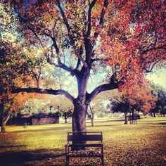 Beautiful Autumn Day - Amateur photography by AB